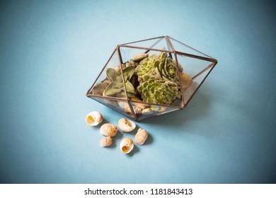 glass florarium for plant, beautiful geometric vase for interior