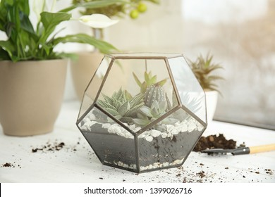 Glass florarium with succulents on wooden window sill. Transplanting home plants