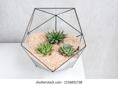 Glass florarium vase with succulent plants and small cactus on white table. Small garden with miniature cactuse. Home indoor plants.