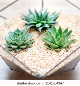 Glass florarium vase with succulent plants and small cactus on wooden background. Small garden with miniature cactuse. Home indoor plants.