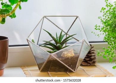 Glass florarium vase with succulent plants standing on the windowsill. Small garden with miniature cactuse, Aloe aristata. Home indoor plants.