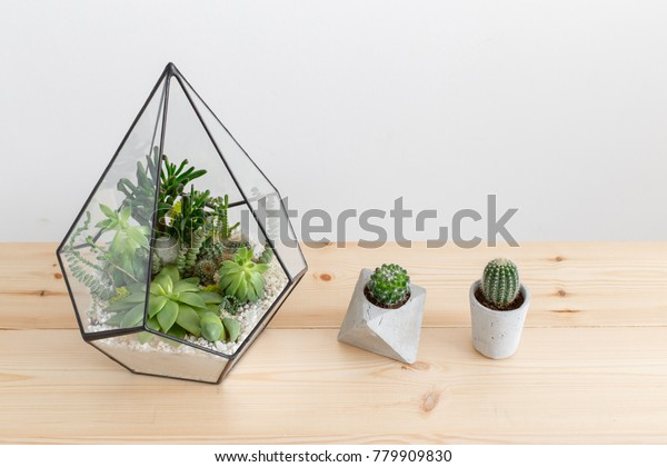 Glass florarium vase with succulent plants and small cactus in a concrete geometric pots on wooden table. Small garden with miniature cactuse, echeveria, crassula. Home indoor plants.