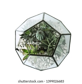 Glass florarium vase with succulents and cactus on white background, top view. Home plants