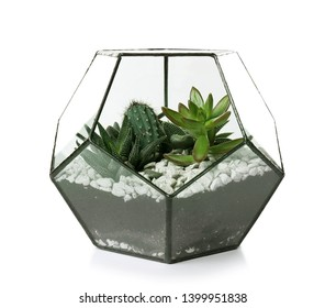 Glass florarium vase with succulents and cactus on white background. Home plants