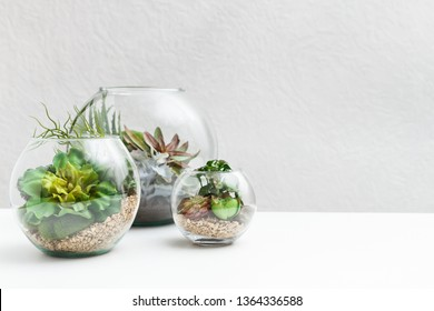 Glass florarium vases with succulent plants on table, copy space