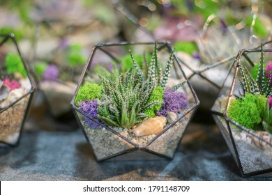 Glass geometric florarium, terrarium, in octahedron form with succulents, sand, moss, stones, pebbles and shells. Metal handmade glass vase planters for home decor and wedding table decoration.