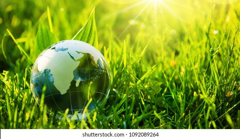 Glass Globe in the Grass. Green Planet - Concept for Environment
