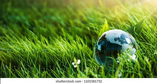 Glass Globe in the Grass. Green Planet Concept for Environment