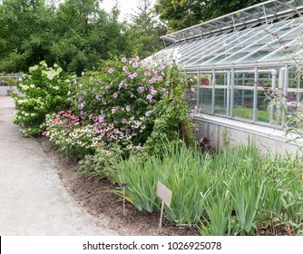 Glass greenhouse with plants and foliage