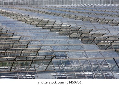 Glass greenhouse rooftops with open windows to let out the heat. Westland is a part of Holland also known as the glass city.