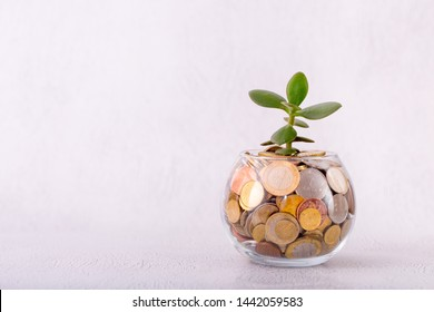 Glass jar with coins and germinating plant on a light background. Accumulation and investment with increasing income. Saving Money for prepare in the future. Contribution to the future.