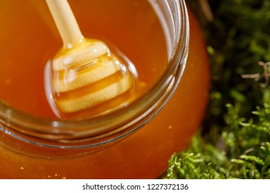 Glass jar with fragrant honey flavored standing in the moss.