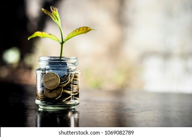A glass jar full of coins and plant growing through it.  Concept of savings, interest,  fixed deposits, pension,  social security cheque .