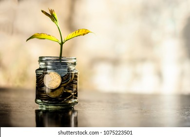 A glass jar full of coins and plant growing through it with some coins and plant leaves.  Concept of savings, interest,  fixed deposits, pension,  social security cheque.