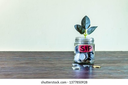 A glass jar full of coins and a plant growing through it. Concept image showing investment via Systematic Investment Plan (SIP) can help building wealth.