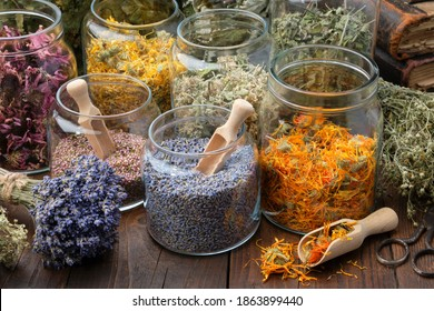Glass jars of dry lavender and calendula flowers. Jars of dry medicinal herbs for making herbal tea, bunch of dry lavender on table. Alternative medicine. - Shutterstock ID 1863899440