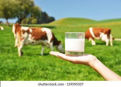 Glass of milk against herd of cows. Emmental region, Switzerland