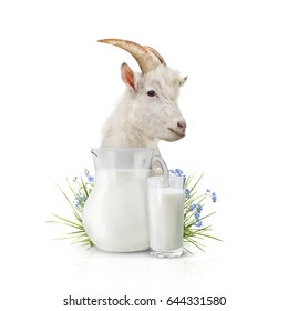 Glass of milk and goat on white background.