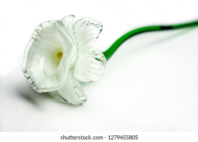 Glass narcissi daffodil flowe close up on white background