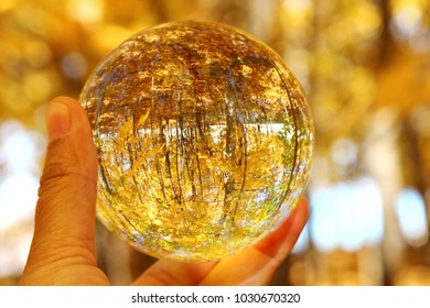 A glass orb in a hand with woods in Autumn season.