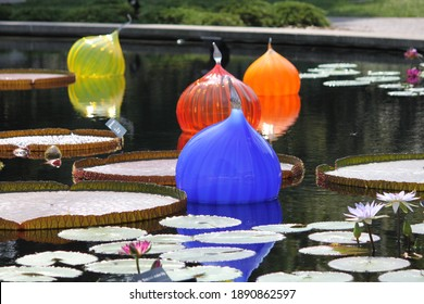 Glass Ornaments Floating in Water