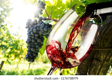glass with red wine in the vineyard