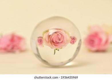 Reflexion über einen Glasrunden-Lensball und Rosen