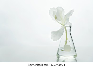 glass science flask with water and white soft natural flower for cosmetic research background