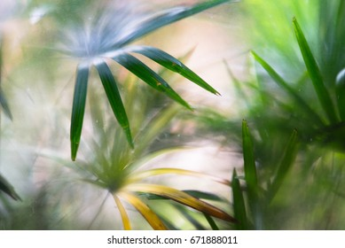 Glass surface with palm leaves on the other side.