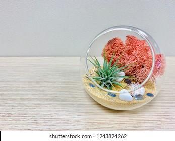 Glass terrarium air plant