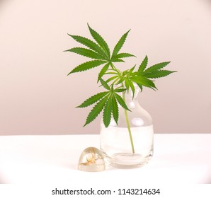Glass vase with cannabis leaves isolated over light colored blackground - Marijuana concept