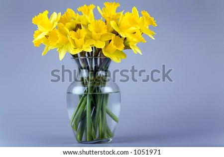 Glass Vase Full Daffodil Flowers Stock Photo Edit Now 1051971