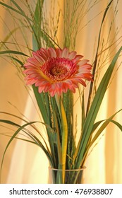 Glass Vase with Gerbera