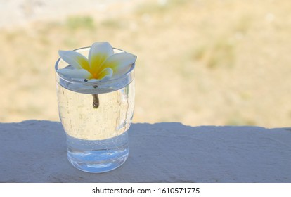 a glass with water and flower bud of white and yellow lilavadi stands in the foreground on a concrete surface