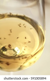 Glass of white wine with fruit flies floating in it. Shallow depth of field.