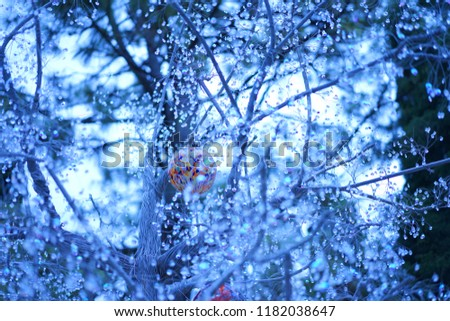 https://image.shutterstock.com/image-photo/glasses-garden-hakone-450w-1182038647.jpg