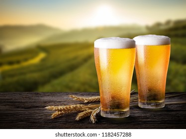 Glasses of light beer with barley and the plantations background.