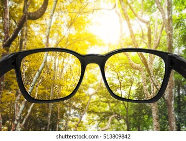 Glasses with season changes forest and beautiful bright sunlight