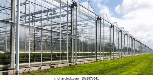 Glasshouses or greenhouses for growing vegetables on a summers day.