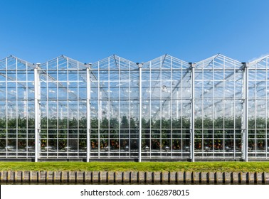 Glasshouses or greenhouses for growing vegetables, tomatoes, on a summers day.