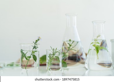 Glasswares in classroom or laboratory. Science and education. Scientific experiment, Researcher, Research concept