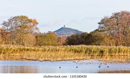 Glastonbury Tor from the RSPB's Ham Wall Nature Reserve, Somerset, England, UK.