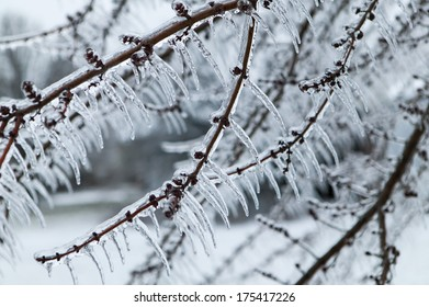 Glazed Tree Branch After Winter Ice Storm, Snow and Frozen Rain, Icicles