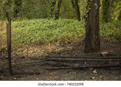 GLEN ELLEN, CALIFORNIA/ USA - OCT 16, 2017: A charred fence next to green plants in a Sonoma County neightborhood. Fires in California have burned over 220,000 acres and destroyed 5700 structures.