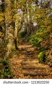 Glenlyon Autumn Pathways - Holywood