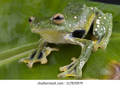 and webbed feet frogs with Toads