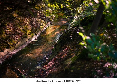 Glimpse into autumn forest with channeled water flow in warm sunlight