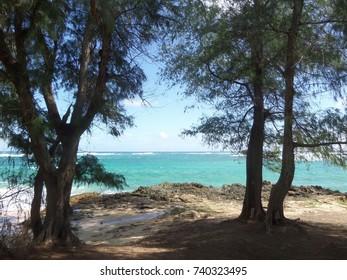 Glimpse of ocean and beach between trees, Kauai, Hawaii