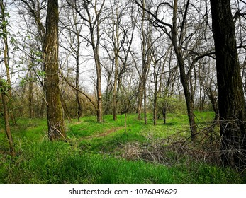 Glimpse of spring forest
