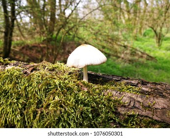Glimpse of spring forest with mushroom in the foreground